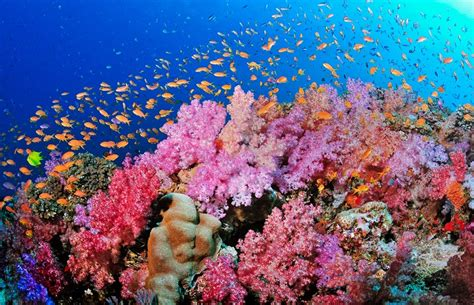 Photographic Locations And Pink Chagne by Coral Reefs May Not Survive Severe Climate Change Effects