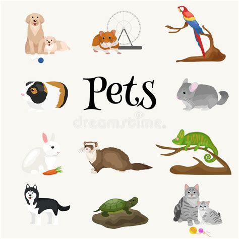 Cat Dreams Of Fish Birds Milk Pet Pet Pet Product by Home Pets Set Cat Parrot Goldfish Hamster