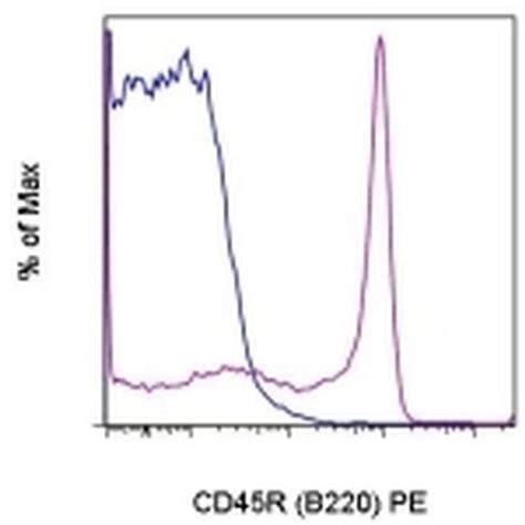 a protein with antibody activity protein kinase regulator activity antibodies