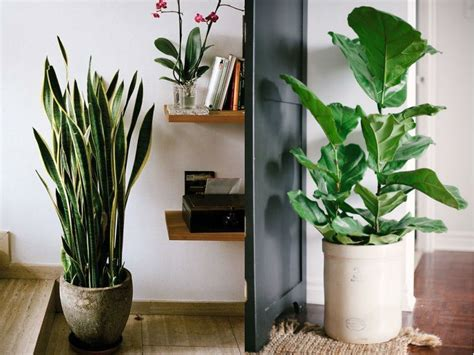 stylish ways to use indoor plants in your home d 233 cor