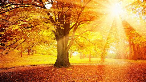 Sunset Autumn, Forest, Yellow Leaves, Trees, Sun Wallpaper