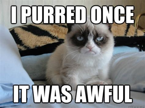 Cat Meme - 32 funny angry cat memes for any occasion freemake