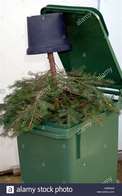 christmas tree in a bin rubbish thrown away discarded bin