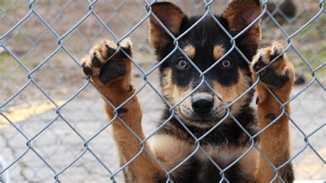 marion county pound local bank donates building for marion county animal shelter wpde