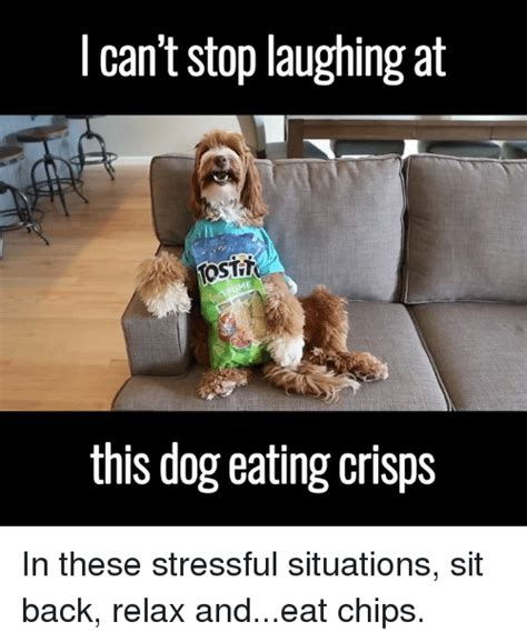 can dogs eat chips chip memes of 2016 on sizzle 4chan