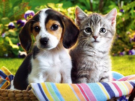 adorable puppies and kittens image of puppy and kitten