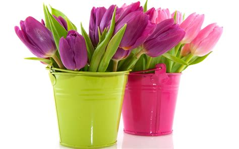 wallpaper flower bucket tulips in the bucket wallpapers and images wallpapers