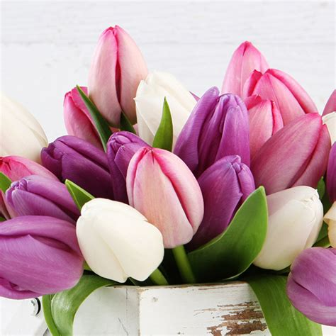 history interesting facts and meaning of tulips