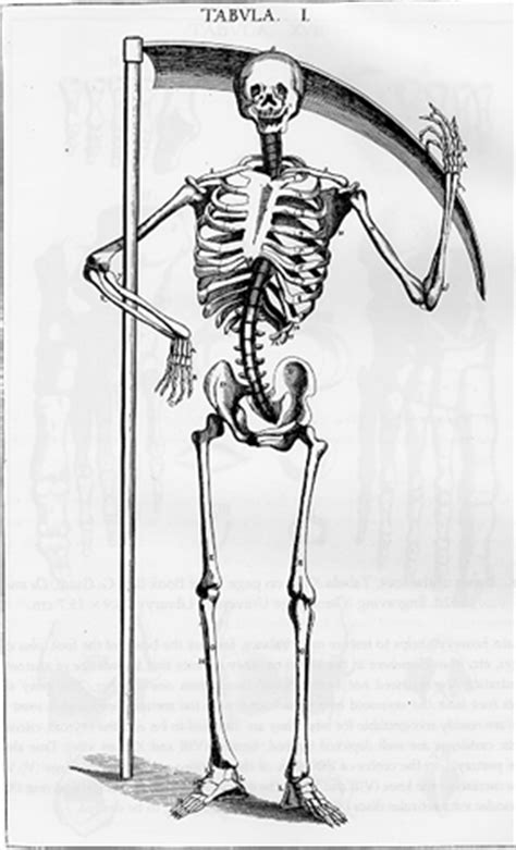 The History of the Skeleton