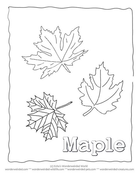 printable maple leaves coloring pages pictures of maple leaves to color maple leaf coloring