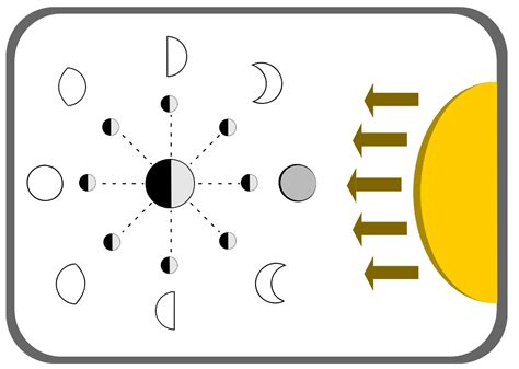 diagram of moon phases moon phases in order labeled on diagram
