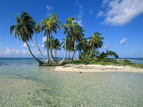 with palm tree island belize s top 10 beaches