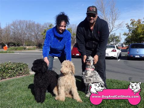 yorkie rescue california northern california standard poodle northern california photo