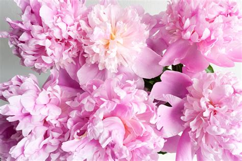 Flowers Pink flowers pink color photo 31590890 fanpop