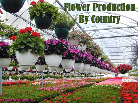 which country makes top ten flower producing countries flower production by