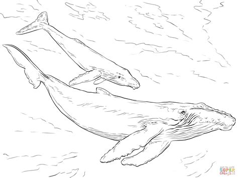 coloring page of humpback whale humpback whales coloring page free printable coloring pages