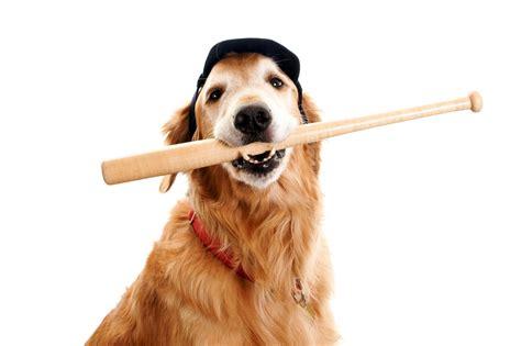 dogs baseball dogs wearing baseball notgraphs baseball