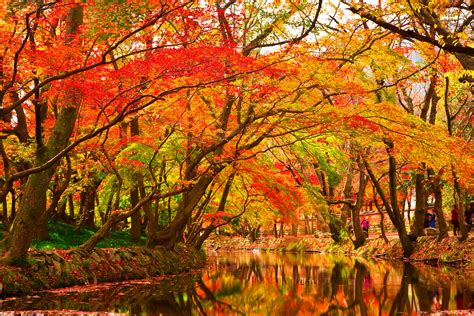 Free Images Tree Water maple tree forest www pixshark images galleries