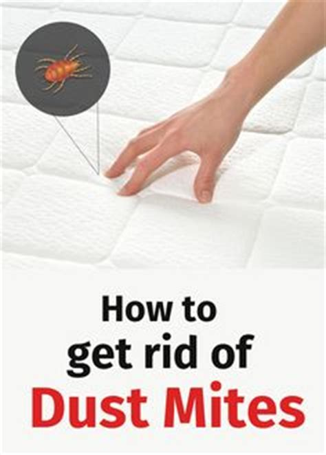 how to get rid of dust mites in bed learn how to get rid of dust mites dust mites can cause