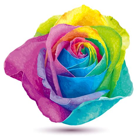rainbow colored roses rainbow colored roses vector material rainbow colored