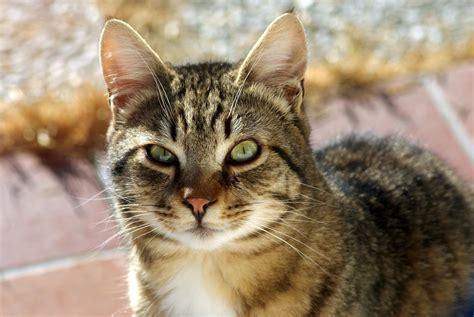 a cat file a cat jpg wikimedia commons