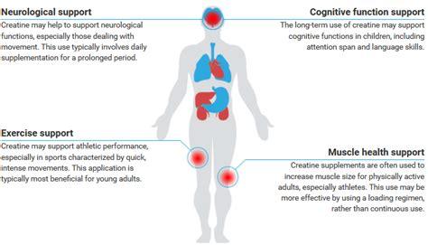 creatine health benefits health benefits of creatine