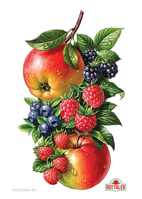 z y fruit company russia beautiful fruit illustrations aterietateriet food culture