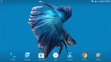 gif wallpaper iphone ios 9 betta fish 3d splendido live wallpaper per android