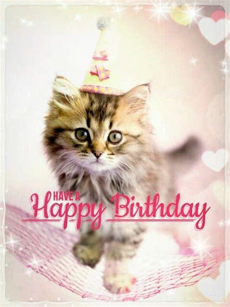 cat birthday best 25 happy birthday cats ideas on pics of