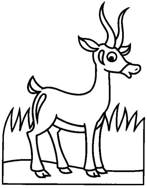 imagenes para colorear venado gacela dibujalia dibujos para colorear animales