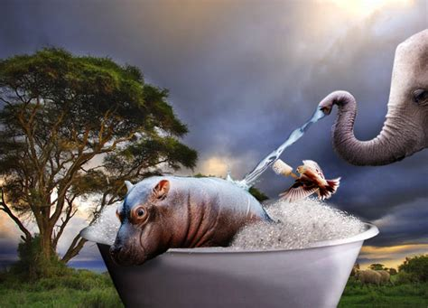 Hippo In Bathtub by Hippo Bath By Agnatha3141 On Deviantart