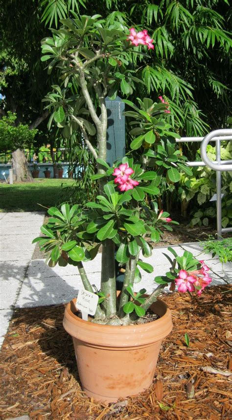 container gardens for florida best sun container flowers