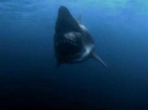 malibu shark attack malibu shark attack 2009 official trailer