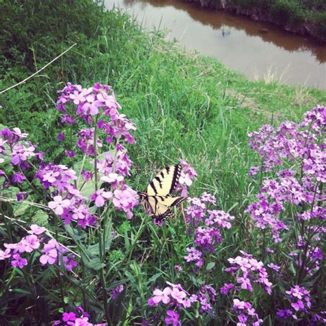 Butterfly Garden Ideas Pinterest Butterfly Garden Ideas Photograph Real Butterfly