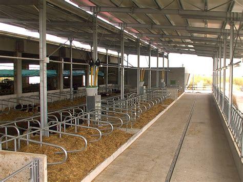 alimentazione bovini alimentazione computerizzata per bovini prosagri