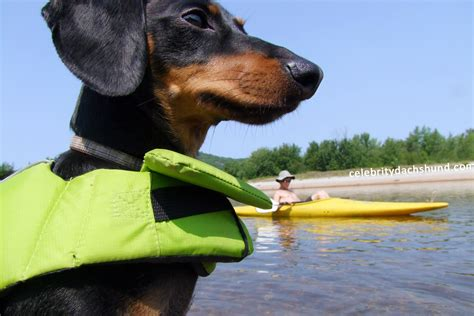 kayak for dogs a weekend kayak crusoe the dachshund