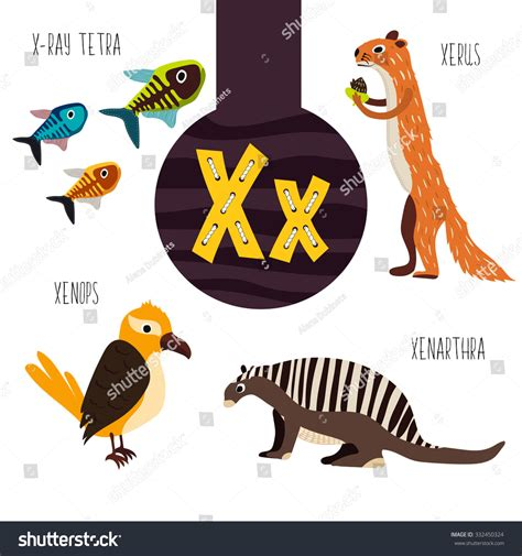 Letter Starting With Y 94 animals start letter x pictures to pin on
