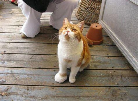 giochi di punture al sedere gatto punto da un insetto cosa fare