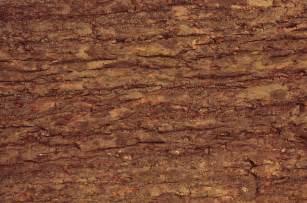 wood texture tree bark texture all design creative