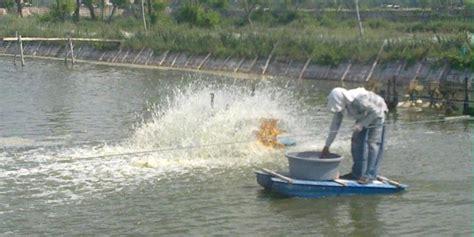 Pakan Udang Vaname sejumlah ganjalan hambat potensi bisnis industri udang