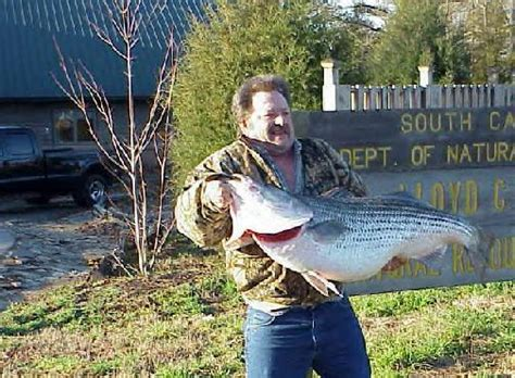 Carolina Records World Record Striped Bass And Released On Lake Ouachita
