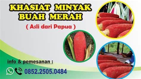 Minyak Lintah Papua Merah inilah manfaat dan khasiat minyak buah merah papua yang