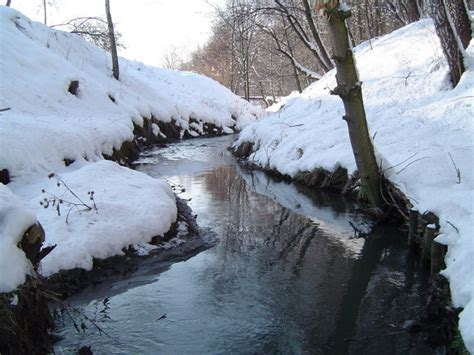 a river in a forest near my home photo 1402650