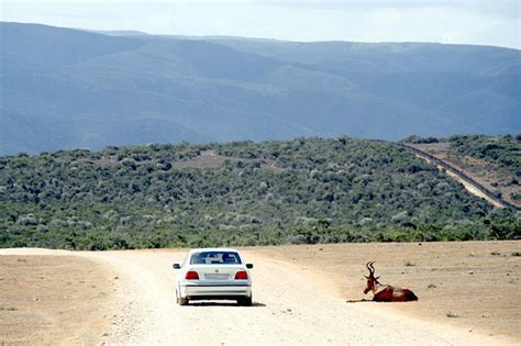 Car Hire South Africa   Compare & Save   Drive South Africa
