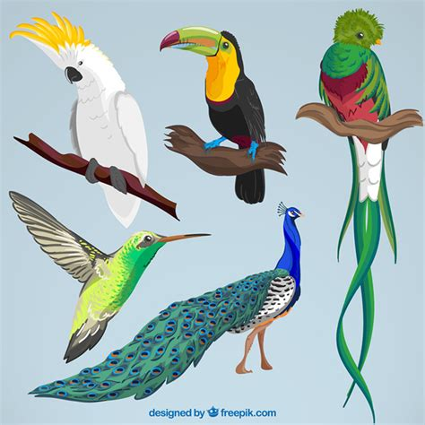 fotos de aves exoticas para imprimir archivos imagenes plumas aves fotos y vectores gratis