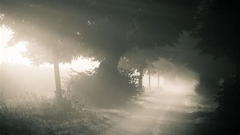 wallpaper for the laptop morning forest foggy laptop backgrounds wallpaper nature