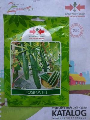 Benih Bayam Jepang jual benih timun jepang toska f1 dadi makmur