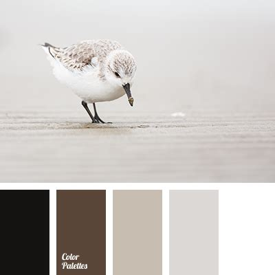 black and white color scheme brown and black color palette ideas