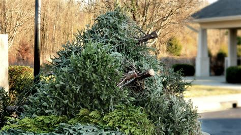 8 uses for your tree after christmas