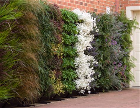 Vertical Gardens Brisbane Benefits Of Vertical Gardens Brisbane Local Food